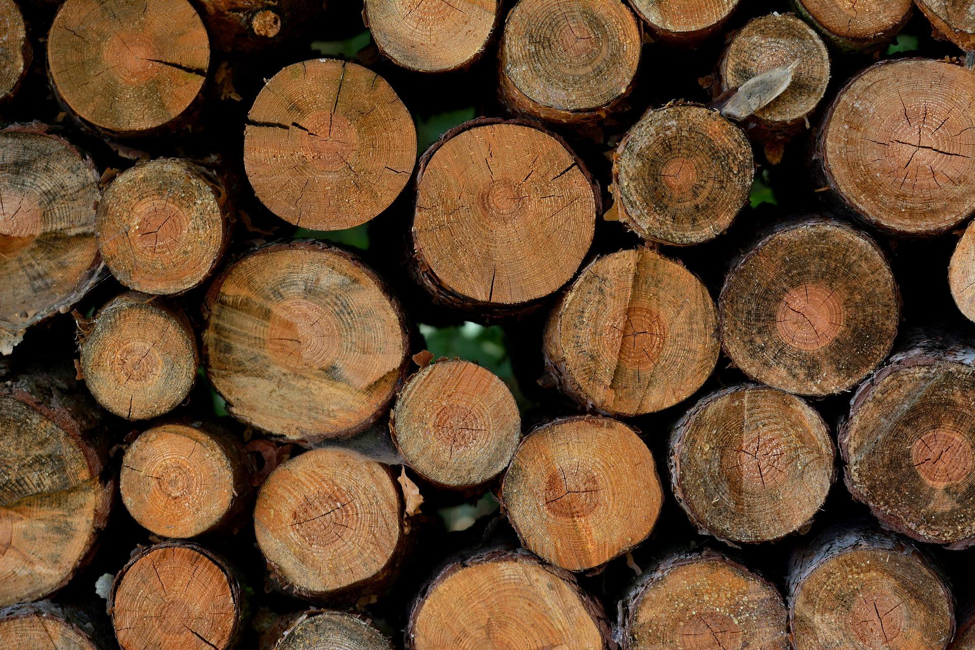 In Zeiten der Holzknappheit: Kalamitätsholz konstruktiv nutzen
